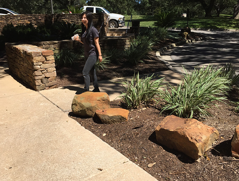 San Antonio Plants and Landscaping Services