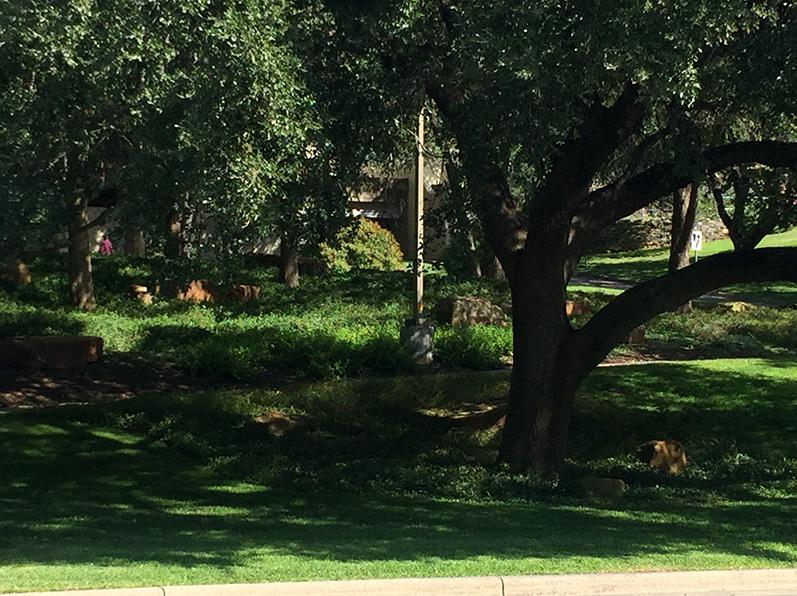 San Antonio Plants/Landscaping Project