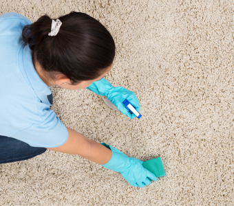 Cleaning Certification at Harvard