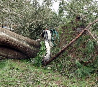 disaster response tree fell